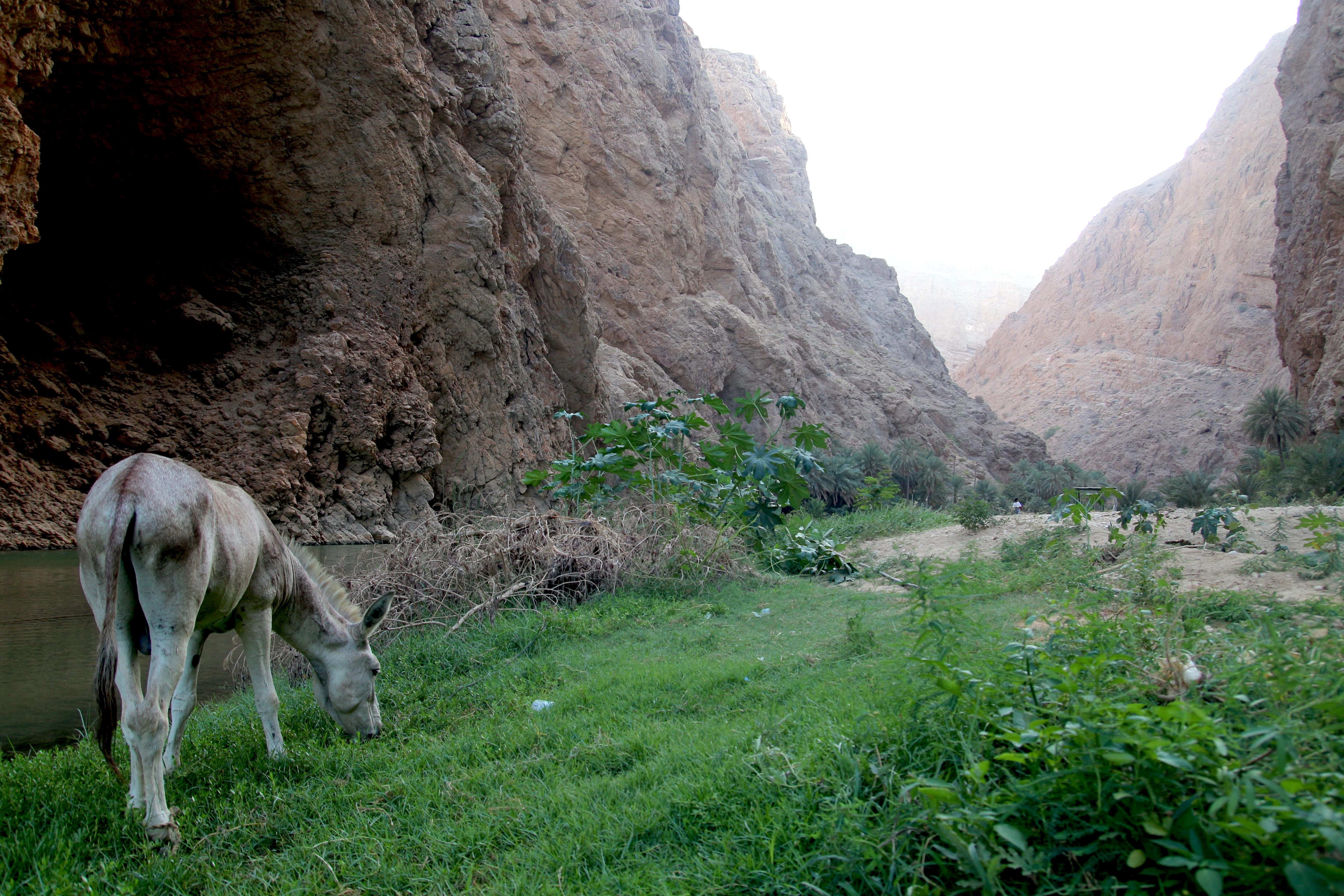 wadishab-twofrenchexplorers