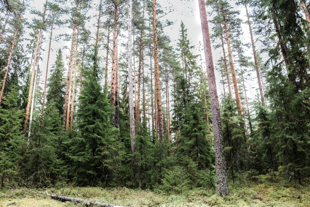 two-french-explorers-blog-finlande-nature-61
